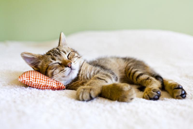 Warum verbringen Katzen so viel Zeit im Schlaf?