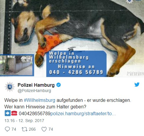 Hundewelpe zu Tode gequält!