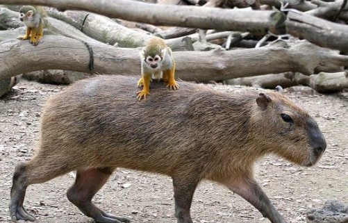 Diesen Tieren hat wohl niemand die Nahrungskette erklärt. Eigentlich dürfte es solche Bilder gar nicht geben.