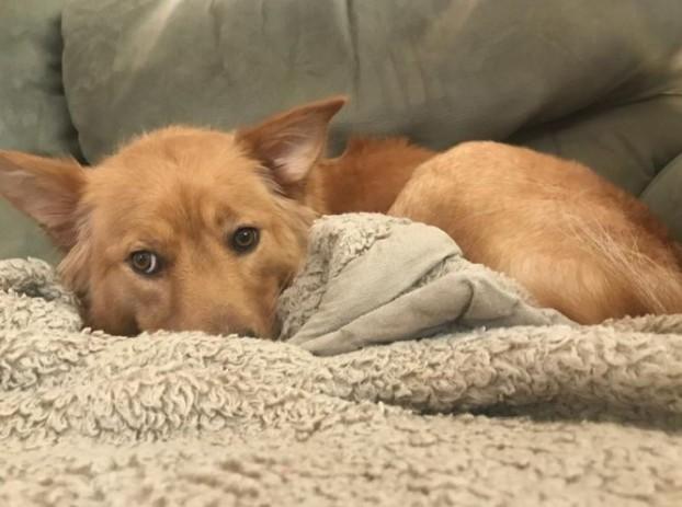 Raleigh North Carolina Dog Rescue