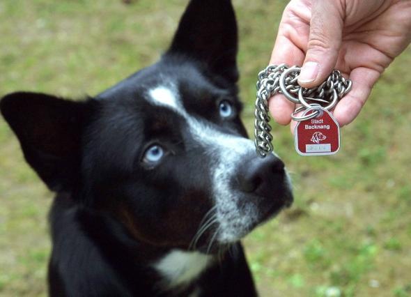 Hundesteuer – warum zahlen Hunde Steuern?