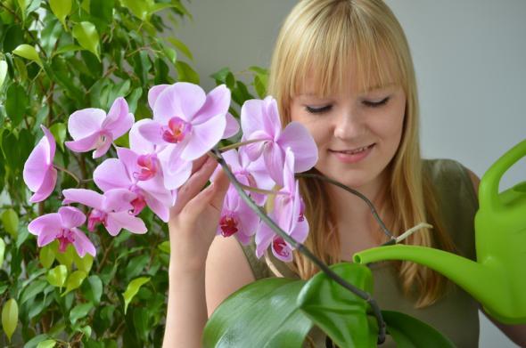 Orchideen gießen und düngen – bitte mit viel Gefühl!