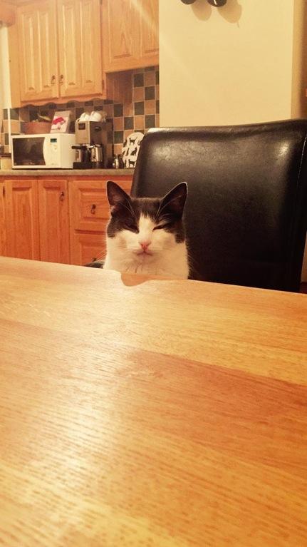 Das sind die 14 besten Bilder von Katzen, die das Internet zu bieten hat. Ich sterbe vor Lachen!