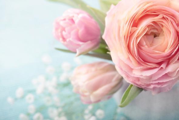 Tipps und Tricks für die Schnittblumenpflege