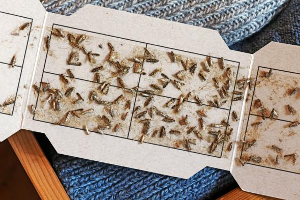 Da kriegst du doch die Motten! Was tun bei ungebetenen Gästen im Schrank?