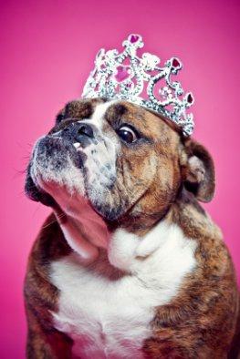 Tierisch – Hundehotels, Katzenperücken und andere skurrile Dinge