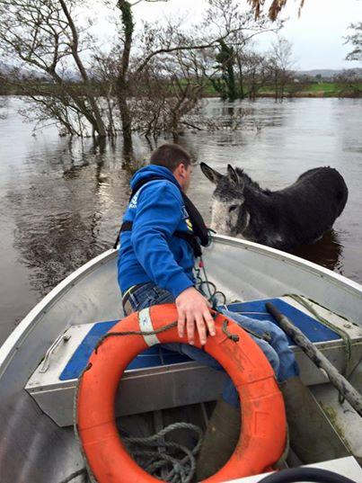 Dieser Esel handelt nicht wie erwartet, als sie ihm aus dem Wasser helfen. Ganz im Gegenteil - seine Retter können es nicht glauben!