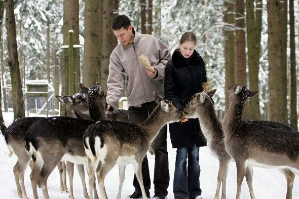 Wildfütterung im Winter – Darf man Wildtiere füttern?