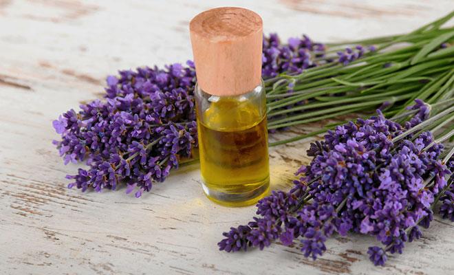 Heilpflanze Lavendel: Natürliches Beruhigungsmittel