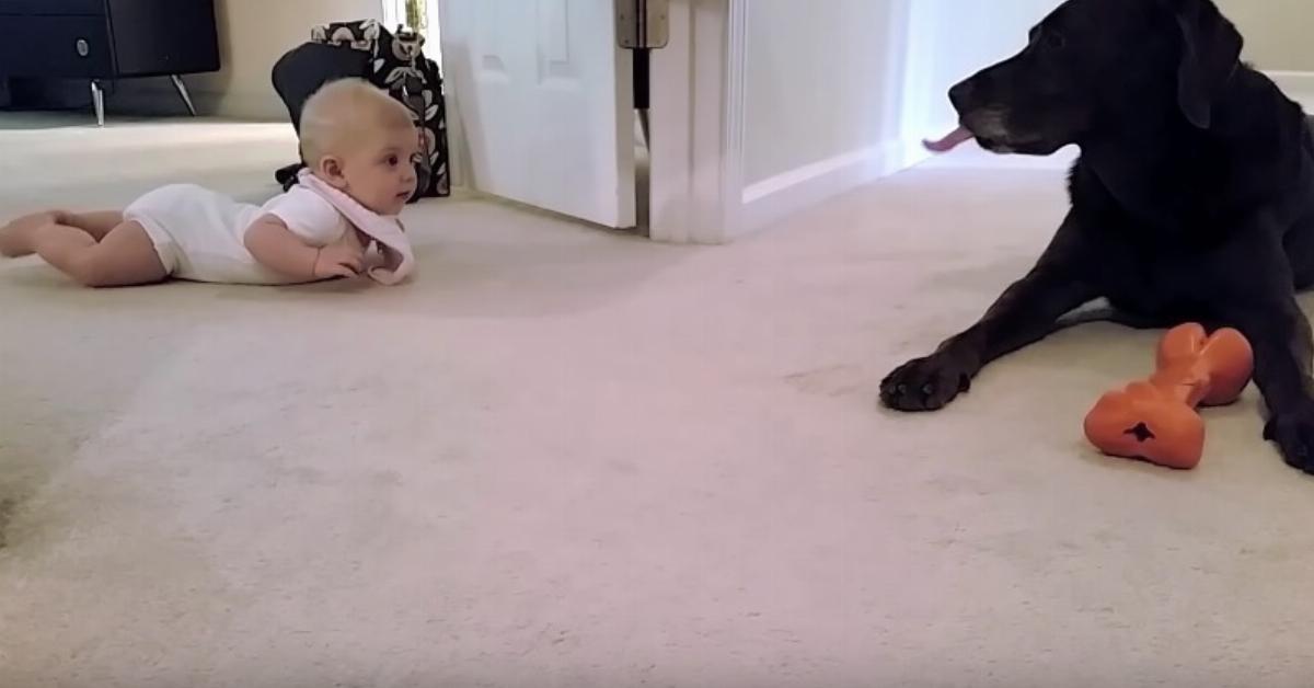 Dieses Baby krabbelt zum allerersten Mal. Die Reaktion des Hundes? Ich muss es mir immer wieder anschauen!