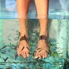 Kangalfischbehandlung – Tierisch gute Fußpflege für Genießer