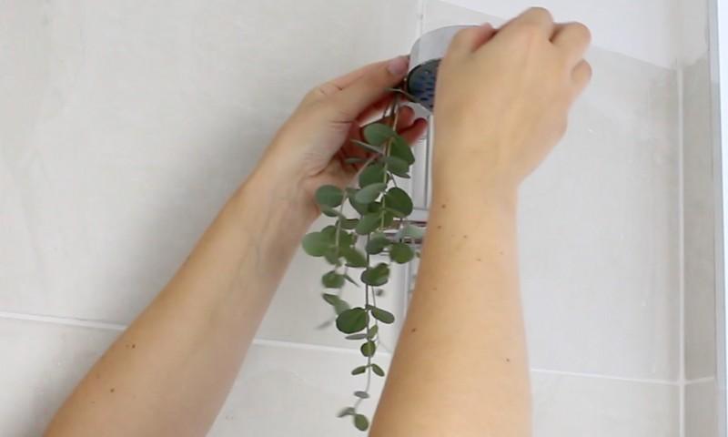 Darum solltest du zusammen mit einer ganz bestimmten Pflanze duschen.