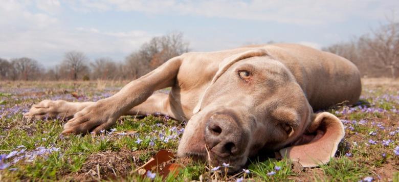 Polizei ermittelt: Unbekannter Tierhasser erschießt einen Hund beim Spaziergang