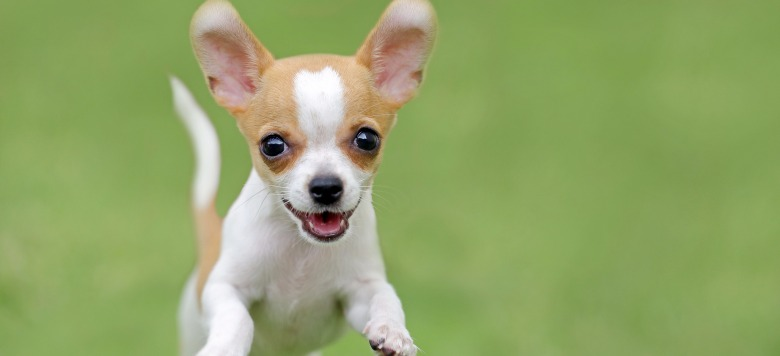 PETA verklagt – Tierrechtsorganisation schläfert den Hund einer Neunjährigen ein