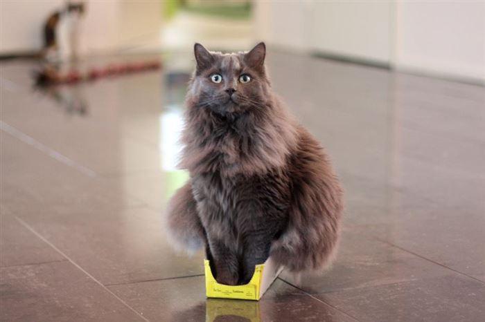 Bei diesen verrückten Katzen kann ich nicht anders als laut loszuprusten. Aber Nr. 4 ist die Beste von allen.