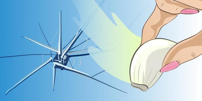 Reibe ein Stück Knoblauch über deine Fensterscheibe. Was dann passiert, wirst du kaum glauben.