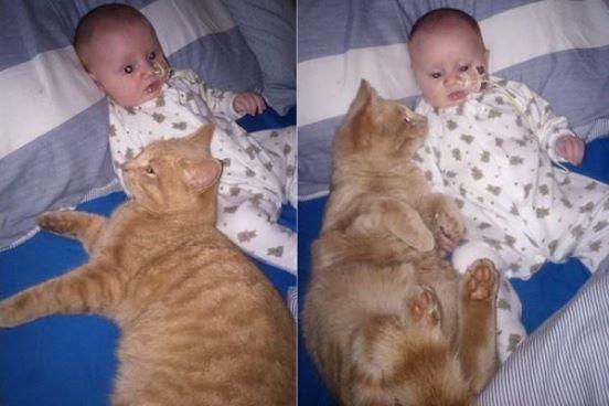 Als niemand hinschaut, schleicht sich die Katze an das kranke Baby heran. Was dann passiert, ist einfach rührend.