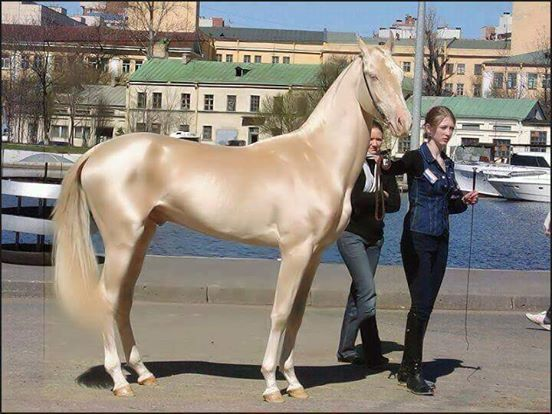 Dieses Pferd wurde zum schönsten der Welt gekürt. Doch als die Experten das Fell untersuchen, sind sie verblüfft.
