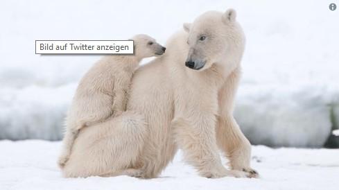 Der Fotograf sieht den Bären im Zoo und drückt angewidert auf den Auslöser. Das Bild entsetzt Tierschützer weltweit.