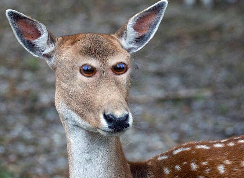 Irrer Blick! So würden Tiere aussehen, wenn ihre Augen vorne wären.
