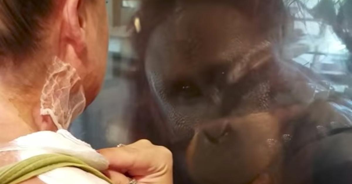 Die junge Frau drückt ihre Brust gegen das Glas des Orang Utan Geheges. Bei 0:53 halte ich gebannt den Atem an.