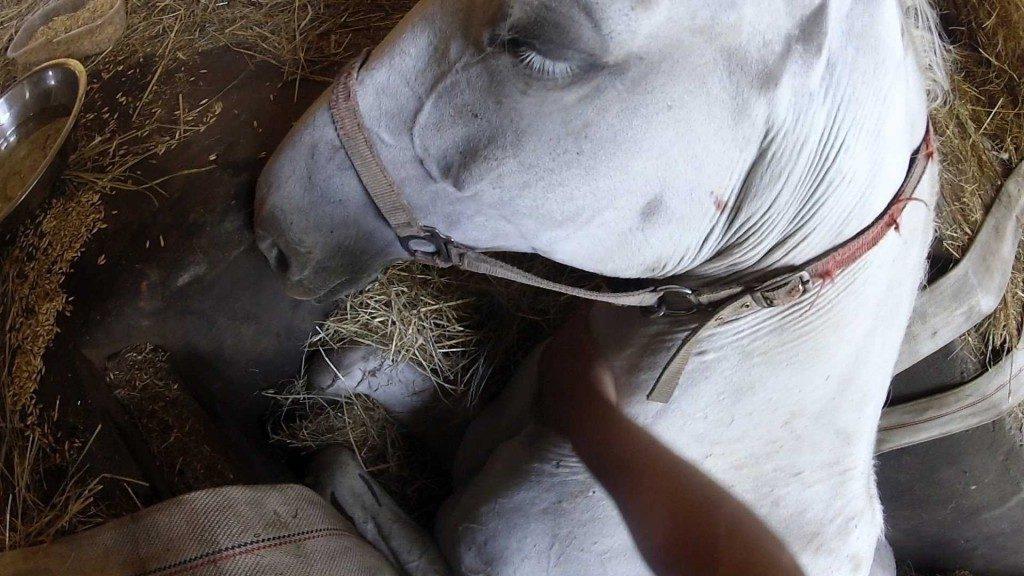 Bauer fleht sein Pferd an, nicht zu sterben – schau dir dessen Beine an, als ein Wunder passiert