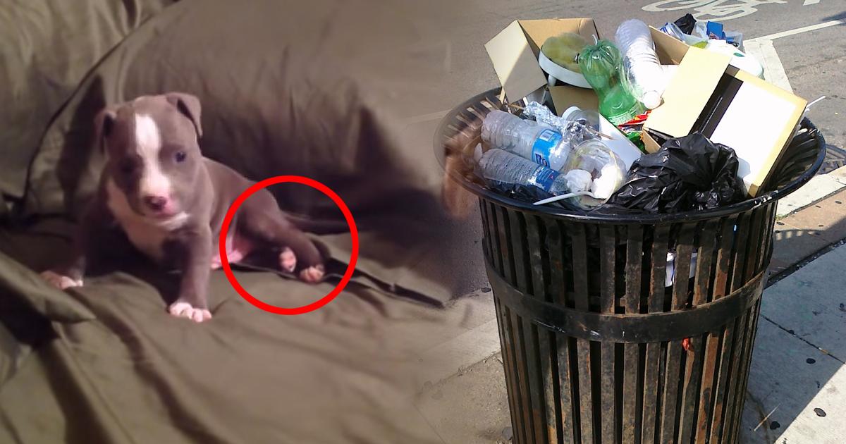 Ein herzloser Züchter warf diesen Pitbull Welpen in den Müll, weil er eine Behinderung hatte…doch dann