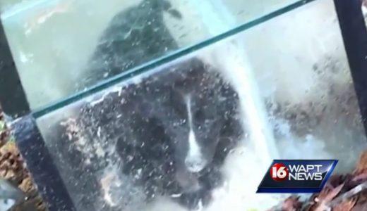 Er suchte im Wald nach seinem Hund,was er dann in einem zugeklebten Aquarium fand entbehrt jeder Vorstellung
