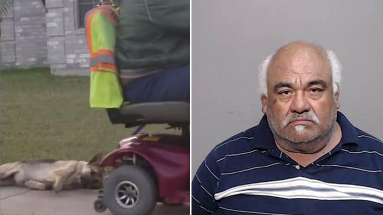 Mann schleift seinen Hund hinter seinem Rollstuhl her