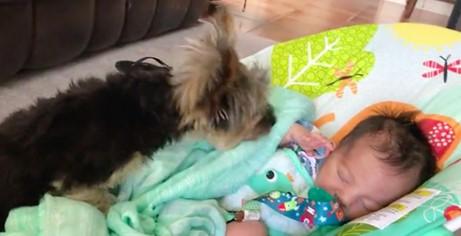 Der Hund deckt das Baby liebevoll mit der Decke zu.
