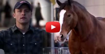 Diese unzerstörbare Freundschaft zwischen Mensch & Pferd hat mich zu Tränen gerührt!