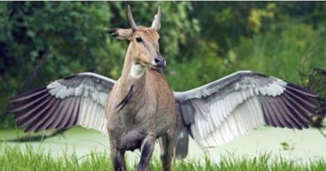 Tiere als (unwissende) Illusionskünstler