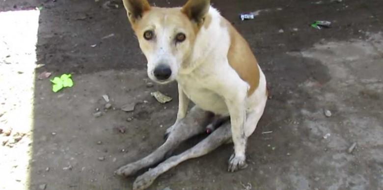 Streunender Hund sitzt eigenartig am Boden – bis ein Tierfreund die furchtbare Wahrheit erkennt!