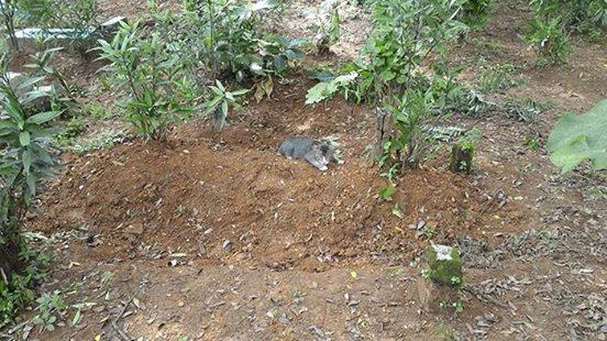 Gutmütig stellt der Mann Essen und Wasser auf die Gräber. Was er am nächsten Tag entdeckt, macht ihn sprachlos.
