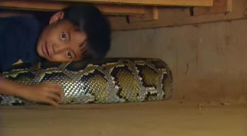 Dieses Baby schlief jede Nacht mit einer Schlange. Schau, was 11 Jahre später aus ihm geworden ist.