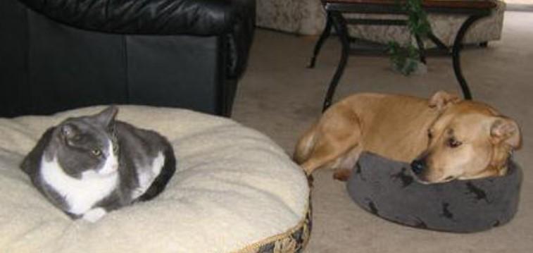 Diese Hunde finden etwas Unerwartetes in ihren Betten – und ihre Reaktionen sind einfach grandios!