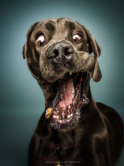 """Diese Hunde wurden in ihrem """"intimsten"""" Moment abgelichtet. Solche Bilder habe ich noch nie gesehen."""