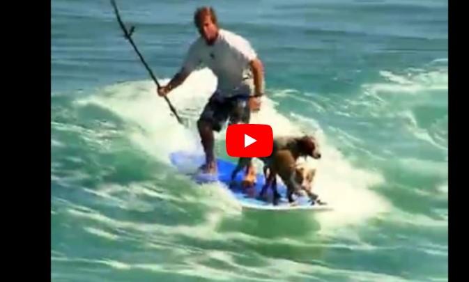 Der Mann surft geschickt auf den Wellen – aber wer da neben ihm auf dem Brett steht, ließ mir den Mund offen stehen.