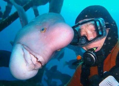 Seit 30 Jahren besucht der Mann seine Freundin unter Wasser. Sie vergisst nie, was er für sie getan hat.