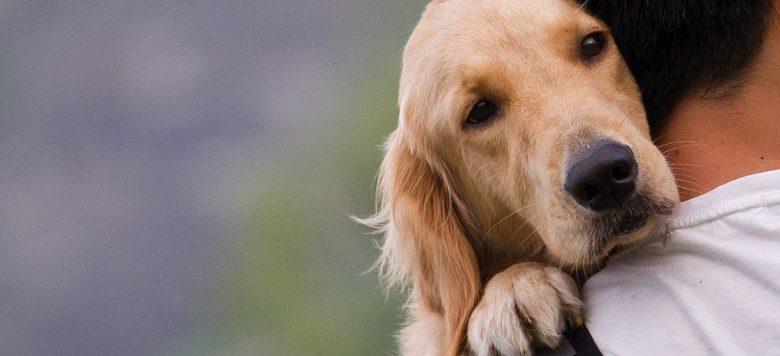 Tolle Rettungsaktion: Student rettet zwei Hunde aus Katastrophengebiet in Texas!