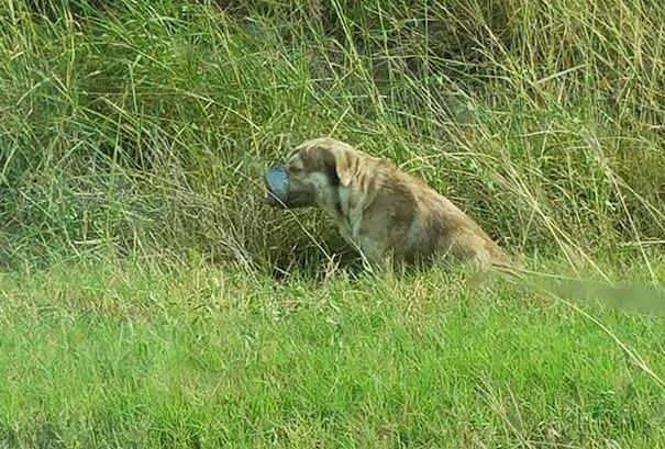Ein Hund, der mit Tape um Maul und Pfoten zurückgelassen wurde um zu sterben, wedelt nach seiner Rettung ununterbrochen mit seinem Schwanz.