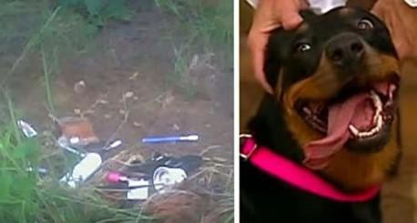 Hund nach Autounfall mit seiner Familie wiedervereint!