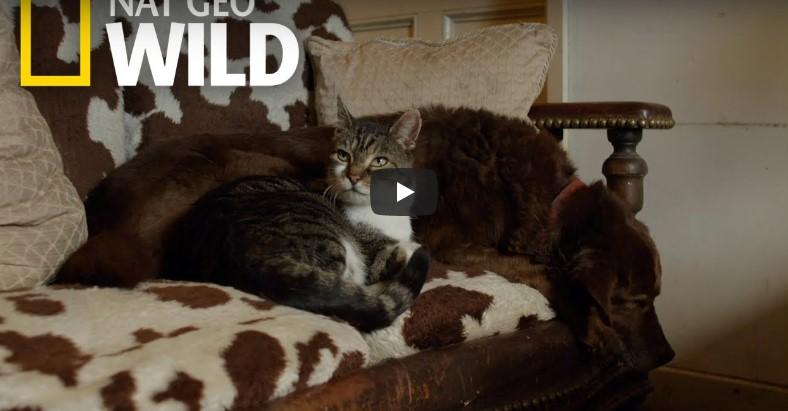 Katze verändert das Leben eines kranken Hundes!