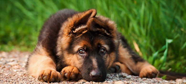 Respektlos: Frau will ihren Hund gegen ein Auto eintauschen!