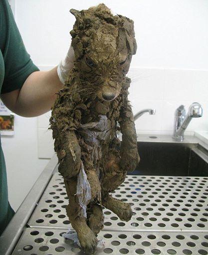 Aus Schlamm gerettetes unkenntliches Tier erst nach Waschen zu erkennen.