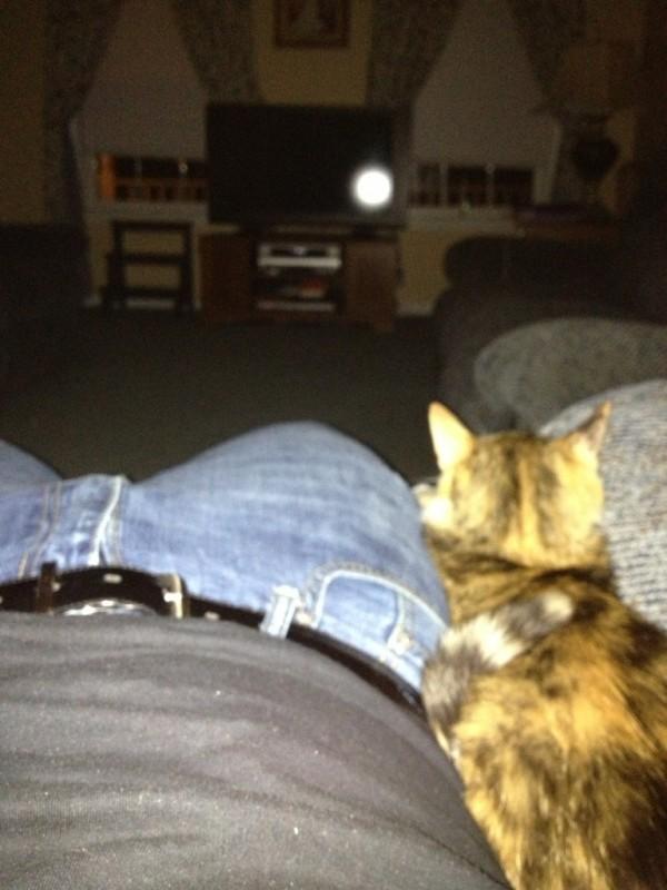 Jeder, der schon einmal mit einer Katze gewohnt hat, wird hier laut loslachen. Denn hier sind die Machtverhältnisse geklärt.