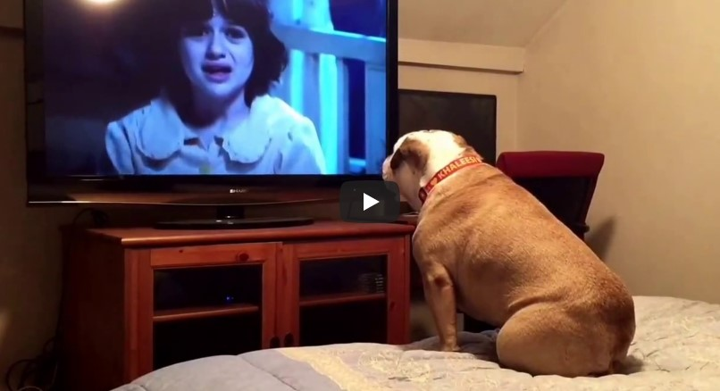 Sie setzen den Hund vor einen Horrorfilm und warten ab … bei 0:12 zeigt sich sein Charakter.
