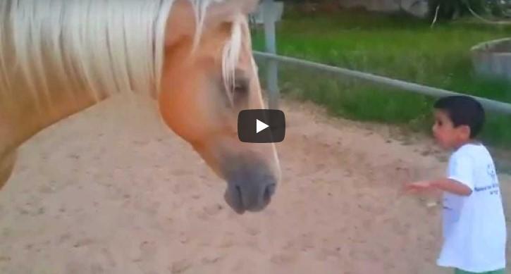 Mutter filmt herzzerreißende Begegnung ihres kranken Kindes mit einem Pferd.