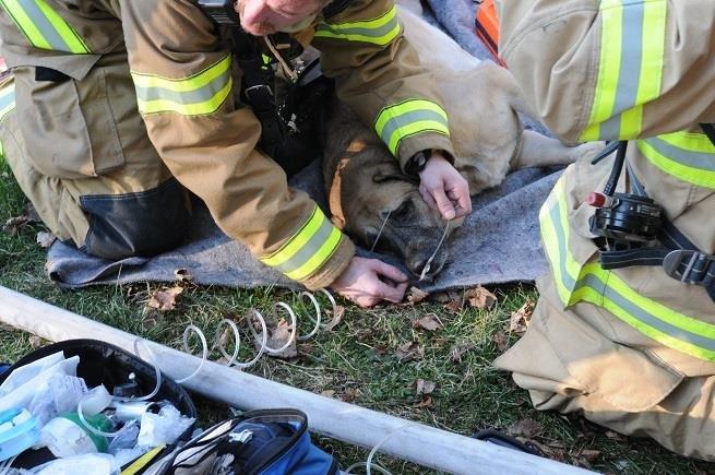 Der Hund wurde aus dem Feuer gerettet – zwei Monate später entdeckt sie etwas Unglaubliches im Haus.