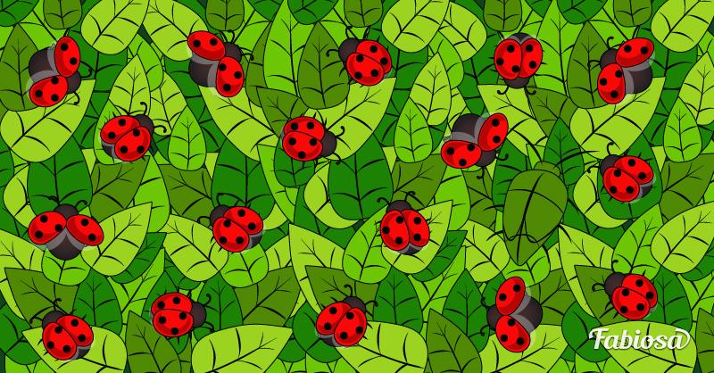Unter diese Marienkäfer hat sich ein Käfer gemischt, raus mit eurer Lupe… und findet ihn!